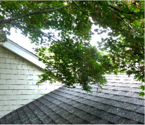 low hanging tree branch on roof Roofing Schenectady NY