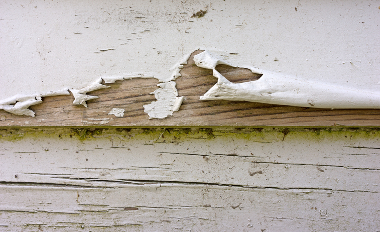 Close view of badly peeling paint on old clapboard siding.