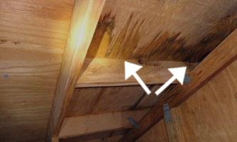 wet plywood in attic