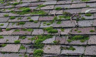 moss on shingle roof